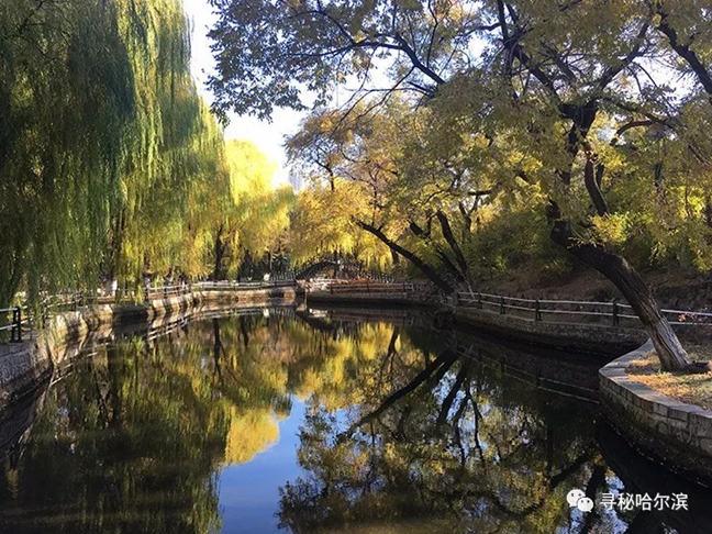 兆麟公园古树名木繁多